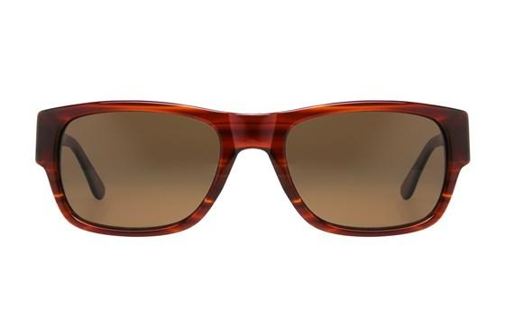 Moda 201 Tortoise Sunglasses
