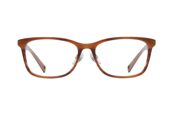 United Colors of Benetton BEO1005 Brown Glasses